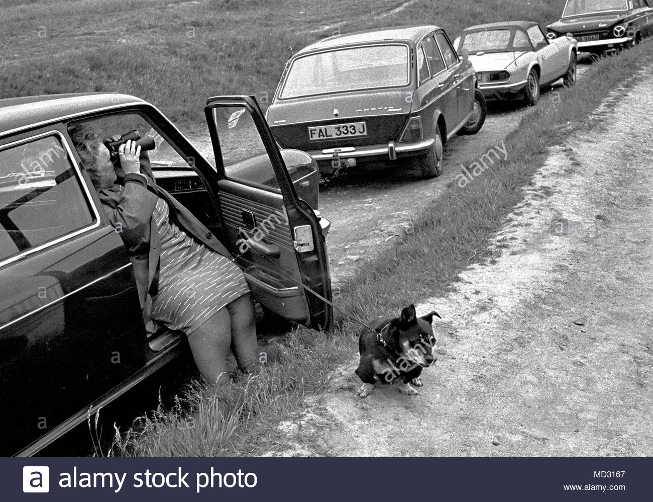 Female motorist parked up with her bored looking pet dog is looking through her binoculars up a country track, road or path in the 1970s photo DON TONGE photographer - Stock Image