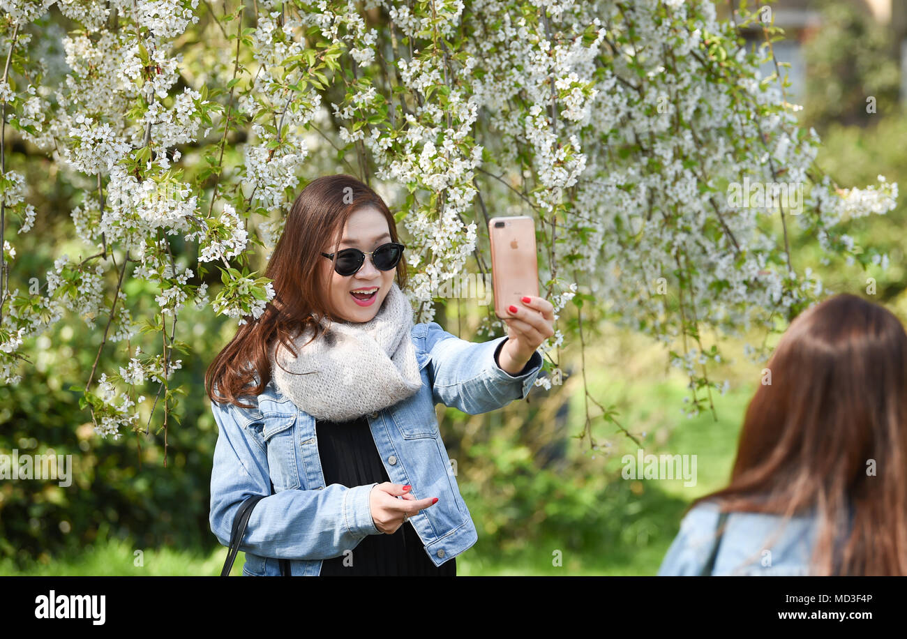 Brighton UK 18th April 2018  - Visitors enjoy the hot sunny weather in the Royal Pavilion gardens in Brighton today . The forecast is for more warm sunny weather over the next few days with temperatures reaching 25 degrees in some parts of the South East Credit: Simon Dack/Alamy Live News - Stock Image
