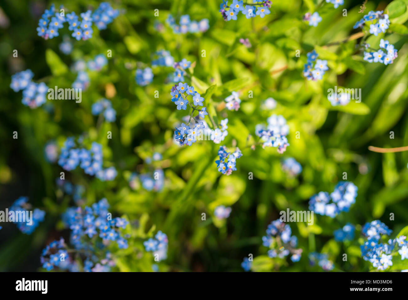 Wild Spring Flowers Blooming In A West London Garden Photo Date