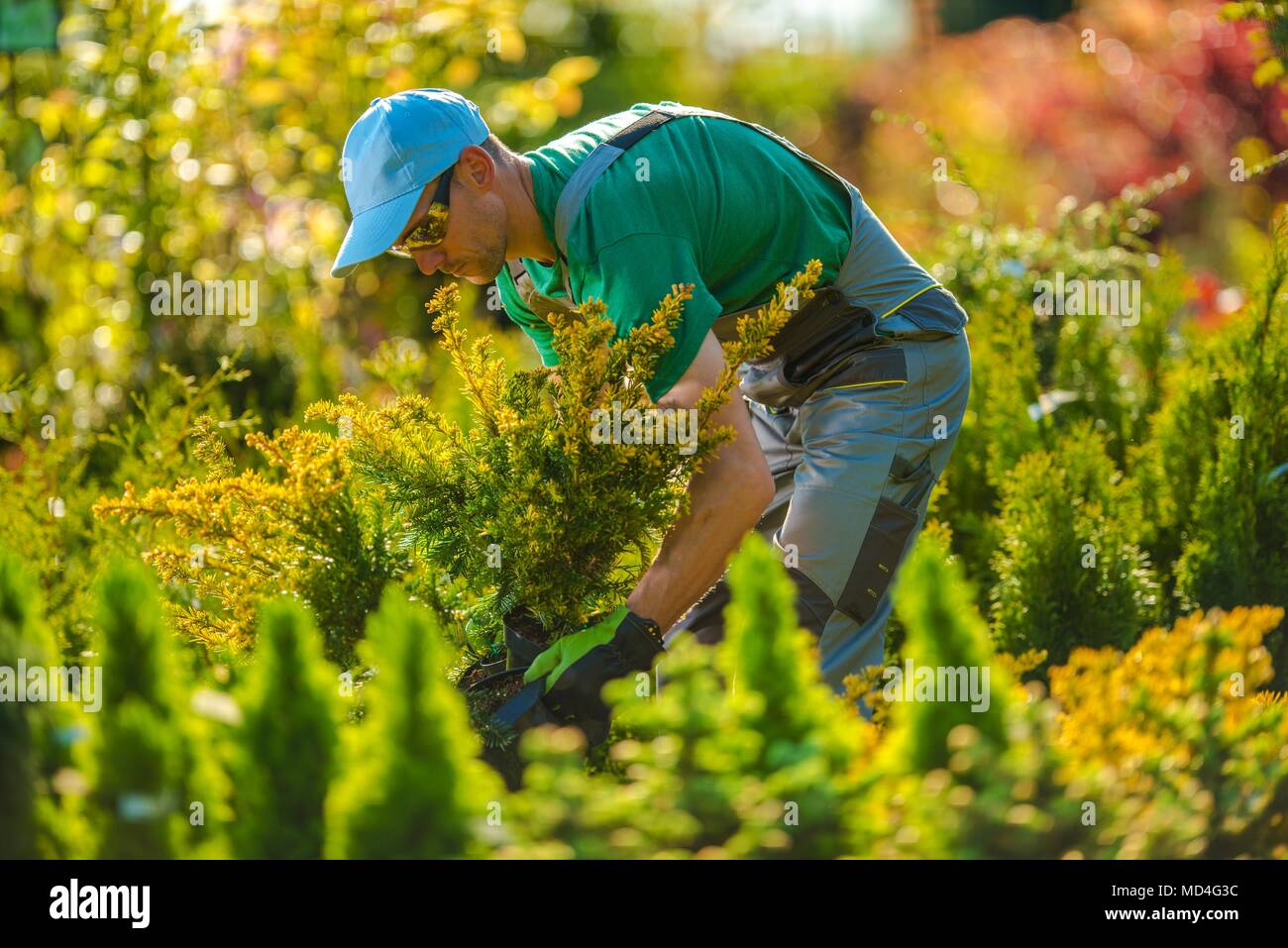 Caucasian Gardener Looking For a New Plants For Garden Project. Landscaping Theme. - Stock Image
