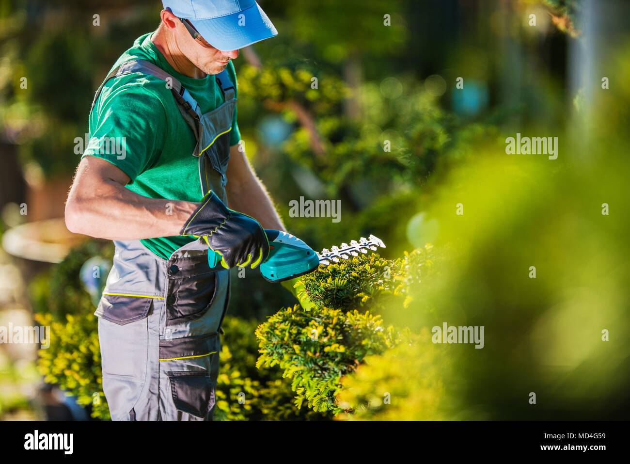 Spring Time Plants Trimming Work. Caucasian Gardener in the Garden. - Stock Image