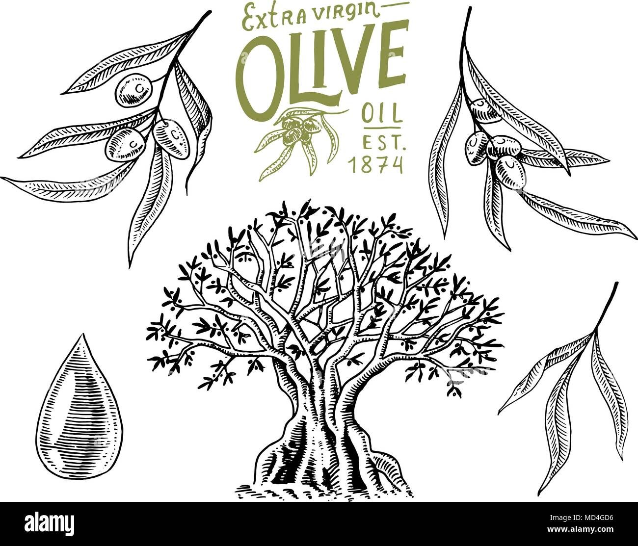 Set of Olive oil and branch of trees. Organic vegetarian product. Green plant for healthy diet. Black fruit for cooking food. Engraved hand drawn in old vintage sketch. Vector illustration. - Stock Vector