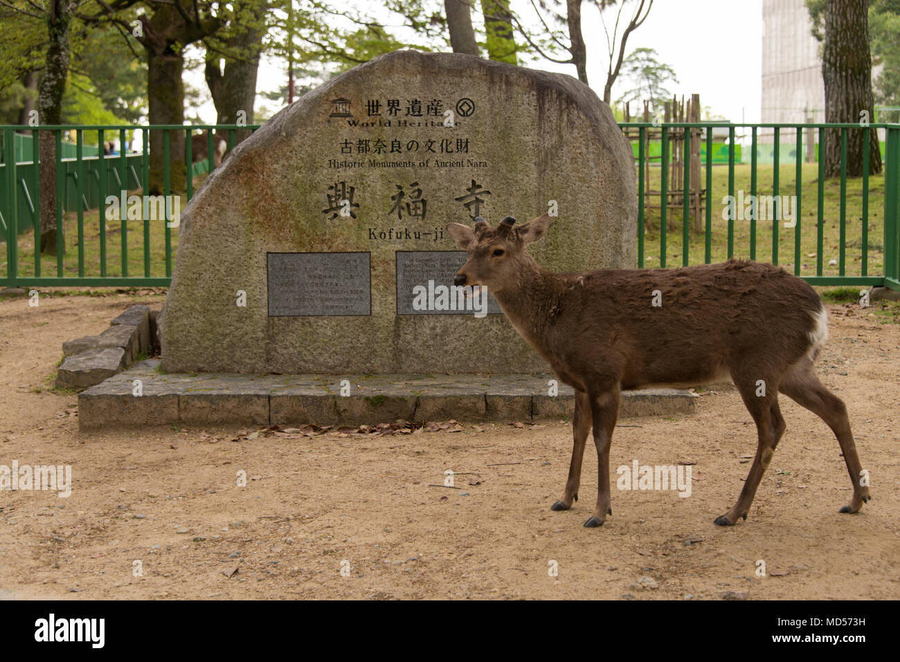 Sitka deer at entrance to Nara World Heritage site - Stock Image