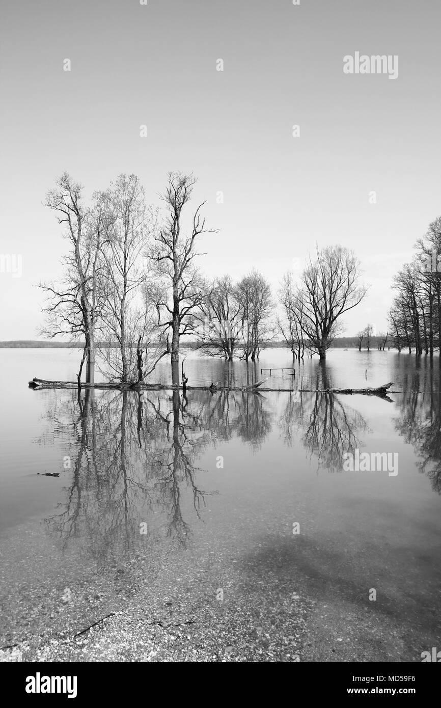 Black and white landscape of flooded forest in Nature park Lonjsko polje, Croatia - Stock Image