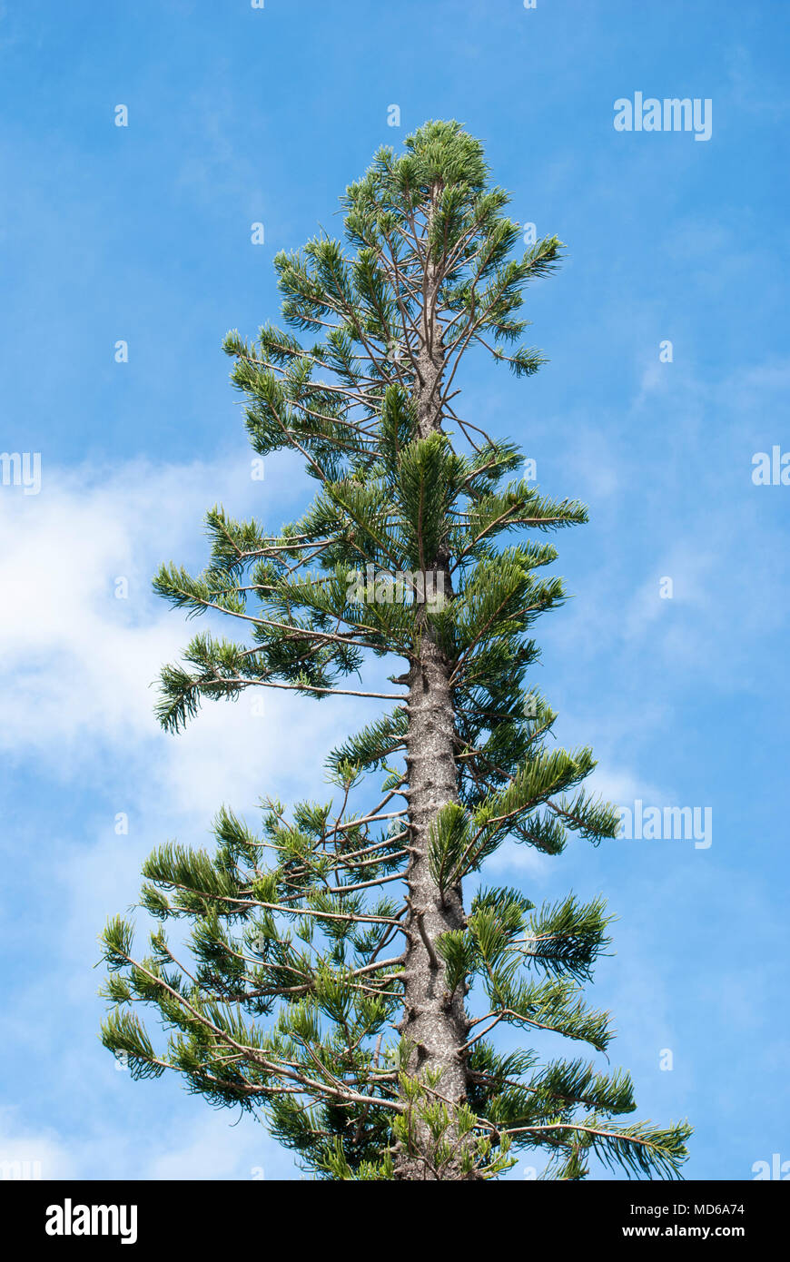 Tropical three with blue sky on background. Concept of vacation and endless summer Stock Photo