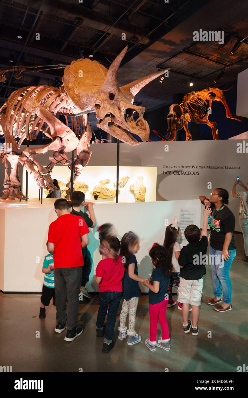 Children looking at a fossil skeleton of a Triceratops dinosaur, in a Dinosaur Museum,  USA - Stock Image