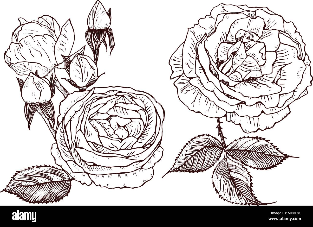 Silhouette Rose Bud In Garden Stock Vector Images Alamy Flower Line Diagram Simple Drawing Of Wedding Botanical Flowers The Or Spring Plant Roses And Peonies With Leaves