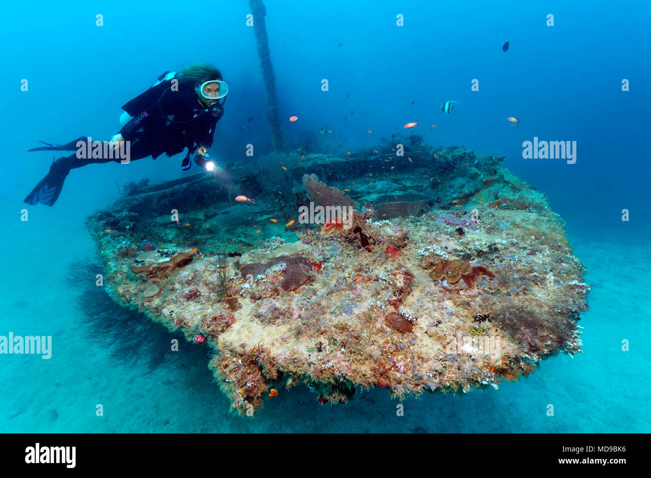 Divers with Lamp Viewed Coral-covered Bow, Fesdu Wreck, Fesdu Island, Ari Atoll, Indian Ocean, Maldives - Stock Image