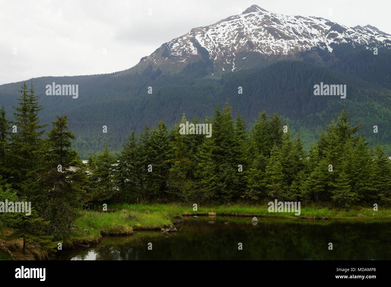 A patch of spruce forest next to the black water with a show capped mountain on the foreground next to Mendenhall glacier, Alaska. - Stock Image