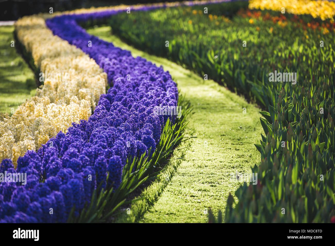 Netherlands, Lisse, Keukenhof gardens - Stock Image