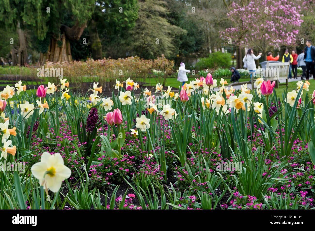 Beautiful spring flowers in stanley park vancouver canada people beautiful spring flowers in stanley park vancouver canada people enjoying the spring blossoms in stanley park mightylinksfo