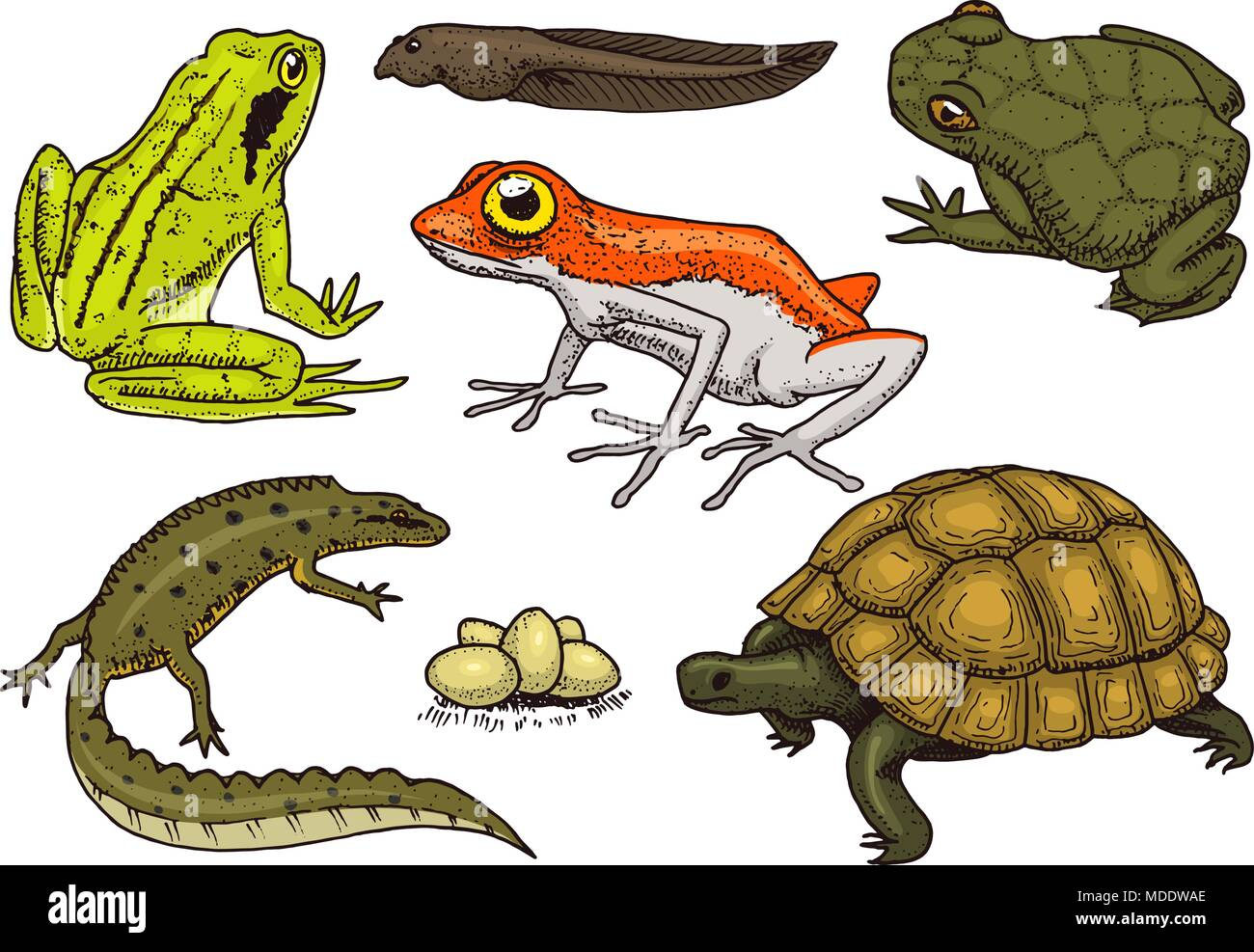 reptiles and amphibians set pet and tropical animals wildlife and rh alamy com Loveland Lizard Lizard Food