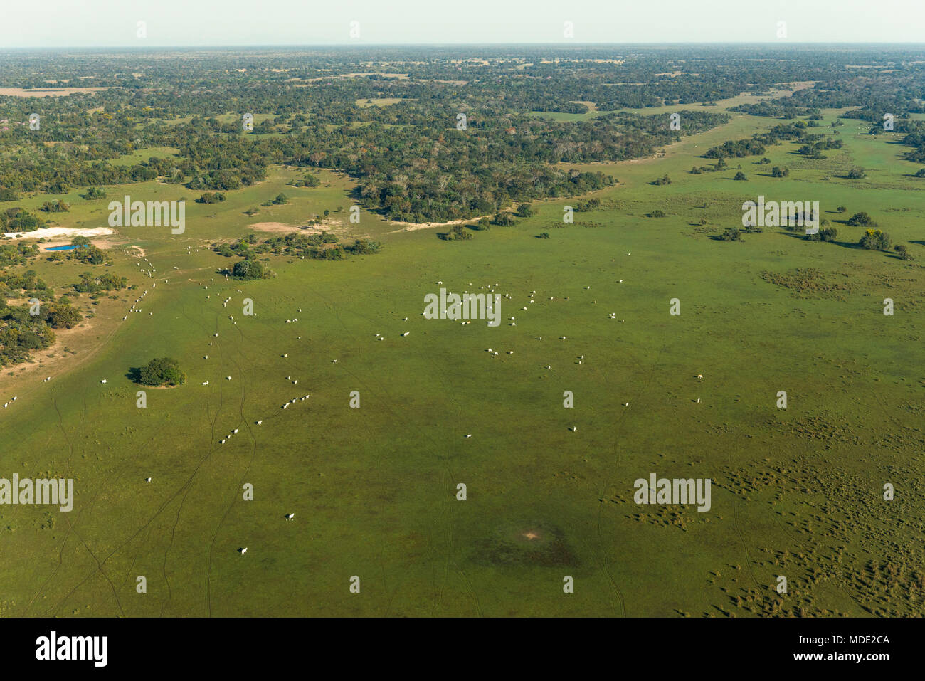 Cattle ranch in the Pantanal of Brazil - Stock Image
