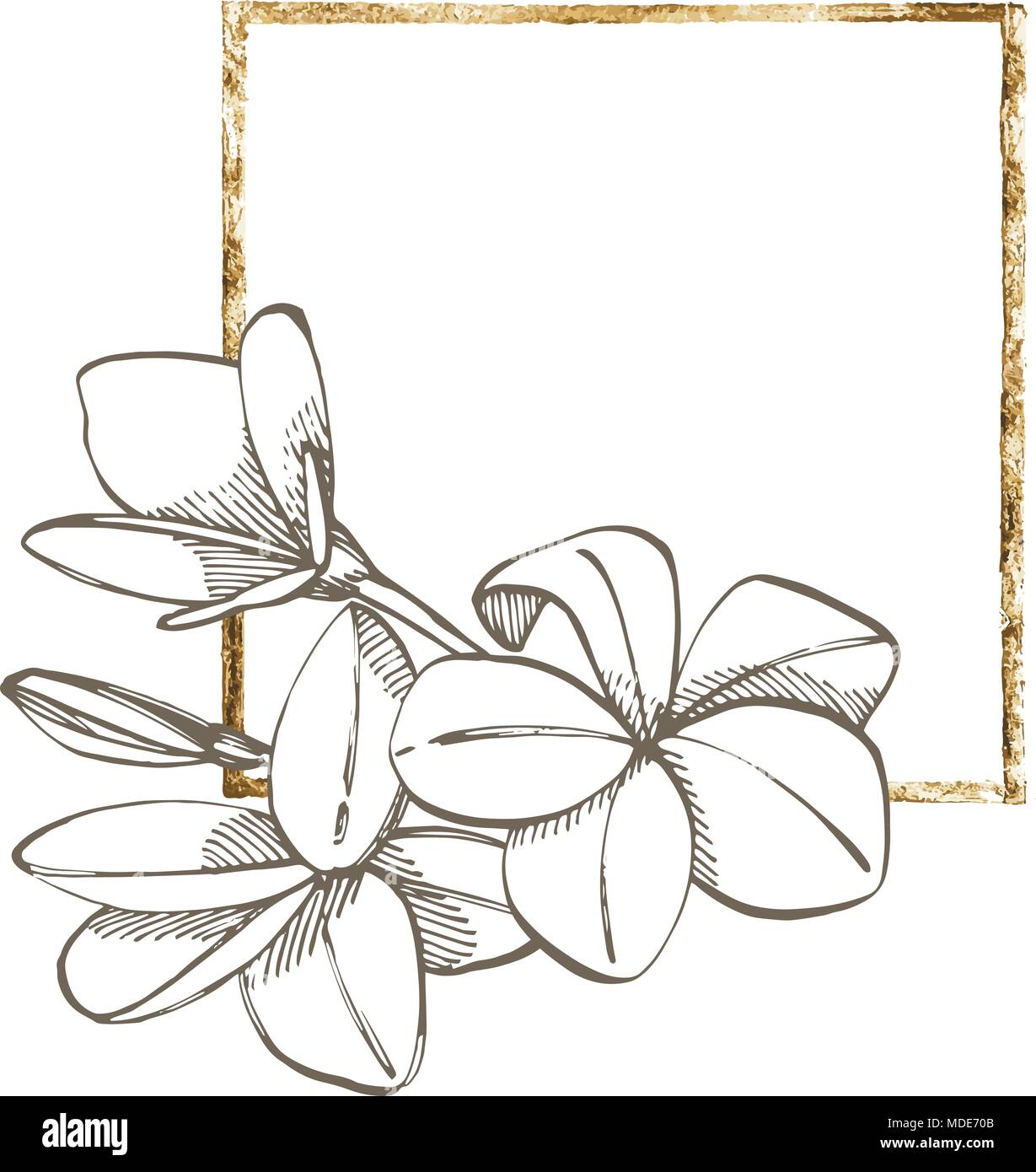 Plumeria flowers. Summer tropical leaves vector design. Floral ...