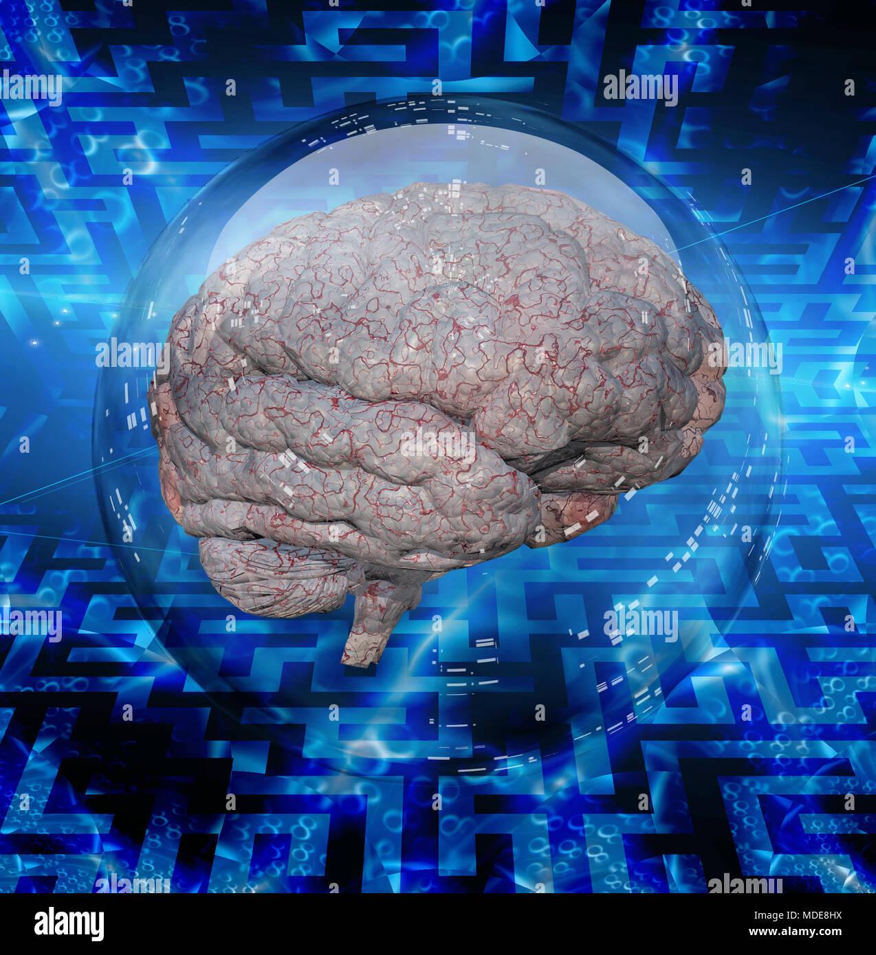 Human brain in glass sphere - Stock Image