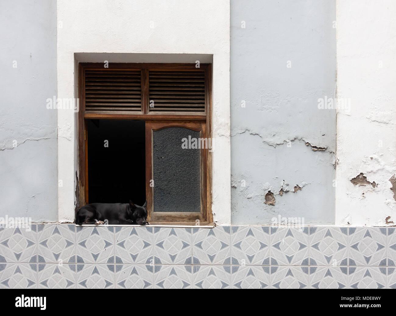 Dog sleeping outside open window - Stock Image