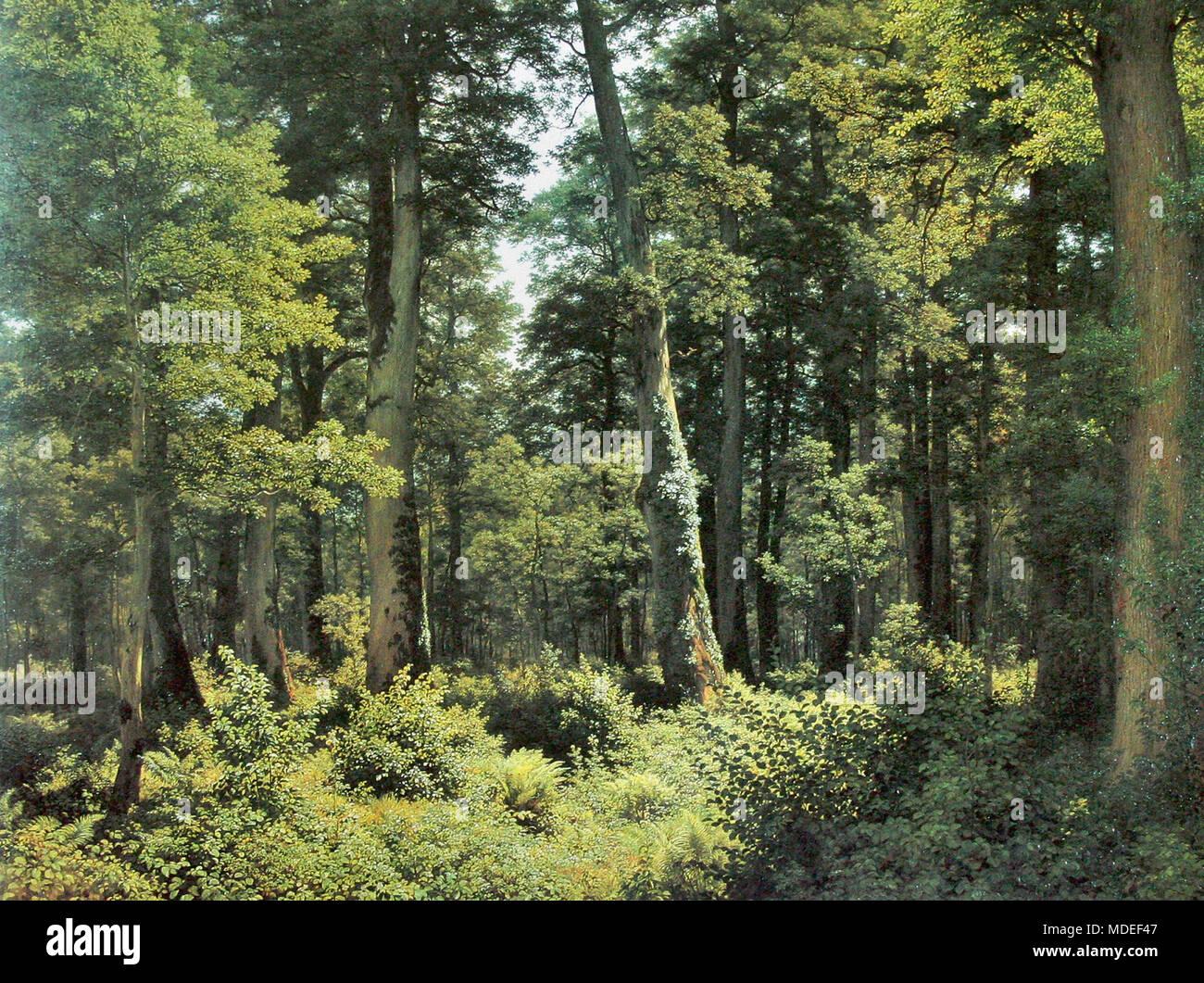 Zund Robert - Eichenwald - Stock Image