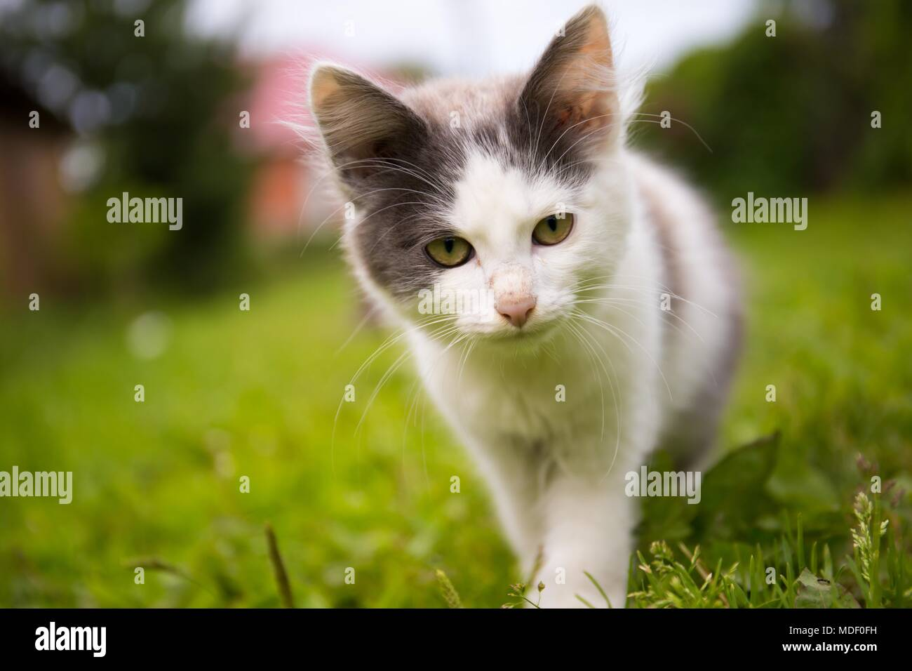 Domestic Cats - Stock Image