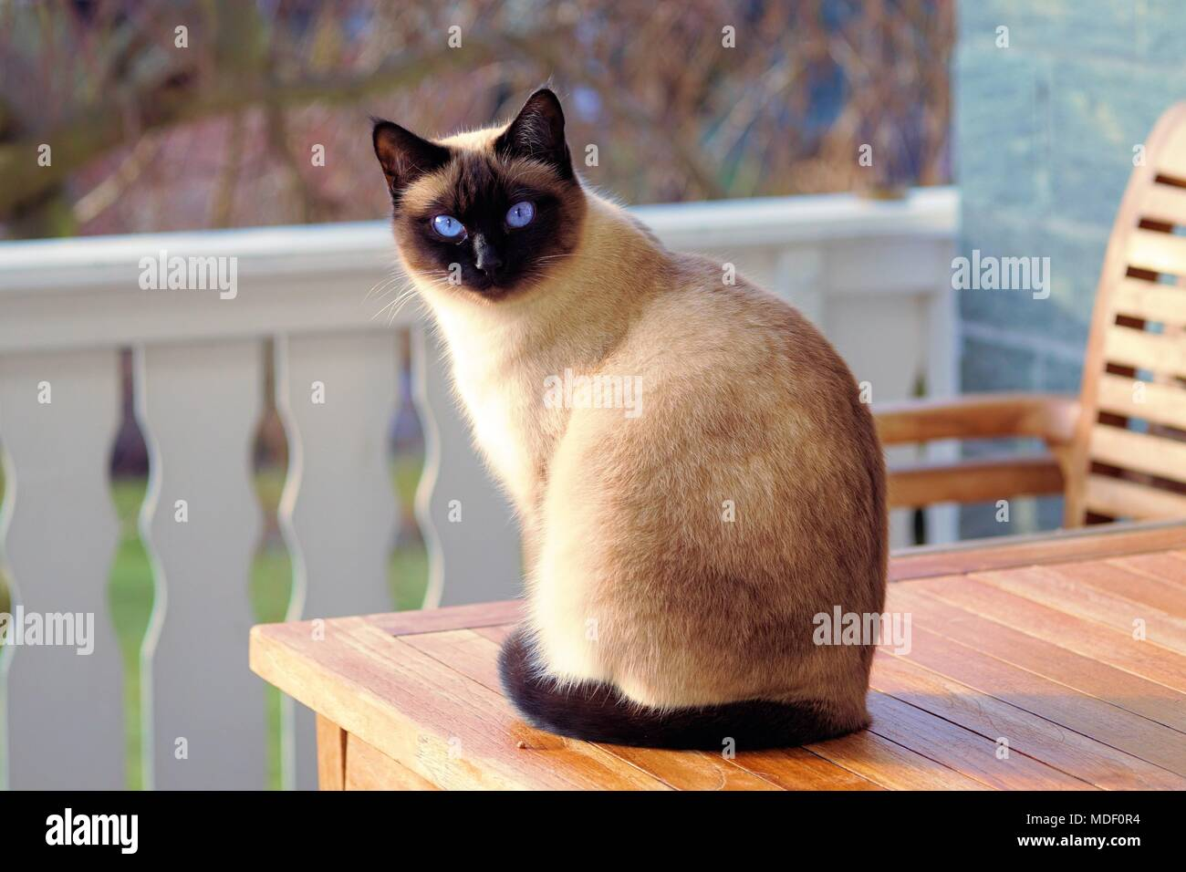 Domestic Cats - Stock Image