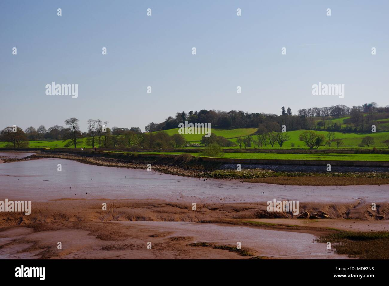 Vibrant Pasture and Wooded Farmland of Powderham beyond Estuarine Mud of the River Exe at Low Tide. Exeter, Devon, UK. April, 2018. - Stock Image