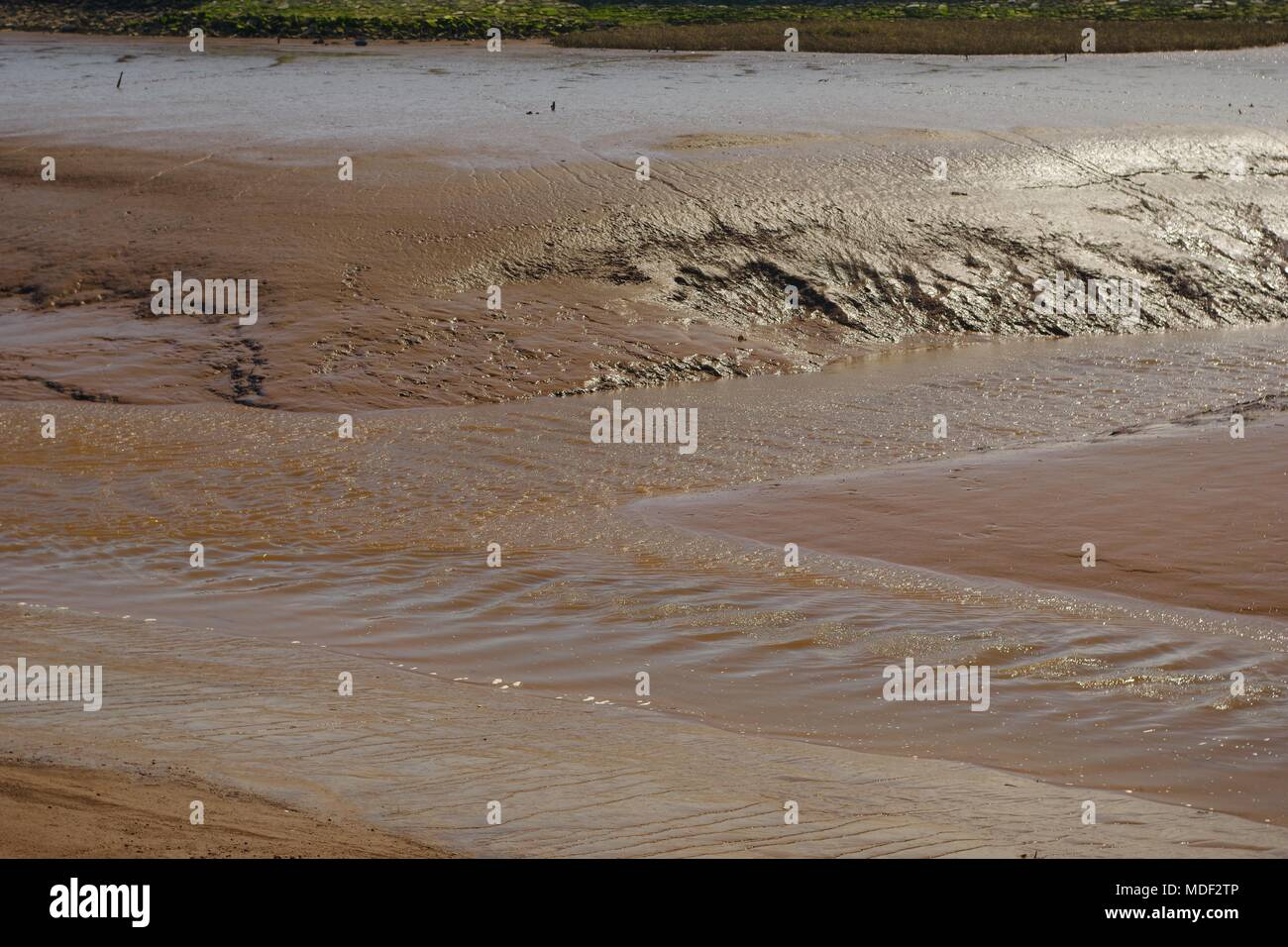 Confluence of Two River Channels Incising into Estuarine mud at Low Tide. Exe Estuary, Turf Lock, Exeter, Devon, UK. - Stock Image
