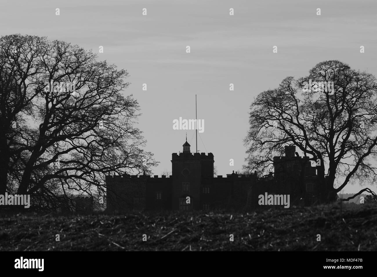 Black and white silhouette of powderham castle between two mature leafless oak trees powderham estate