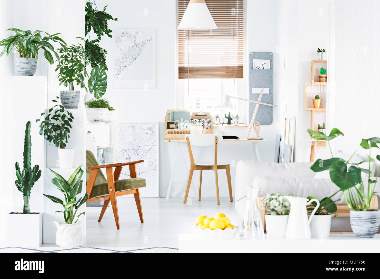 Botanical home office interior with white walls, wooden chair and lemons in a bowl - Stock Image