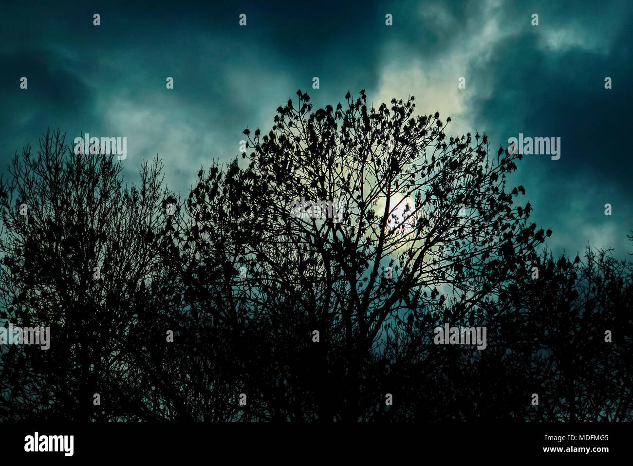 nightmarish forest scene - Stock Image