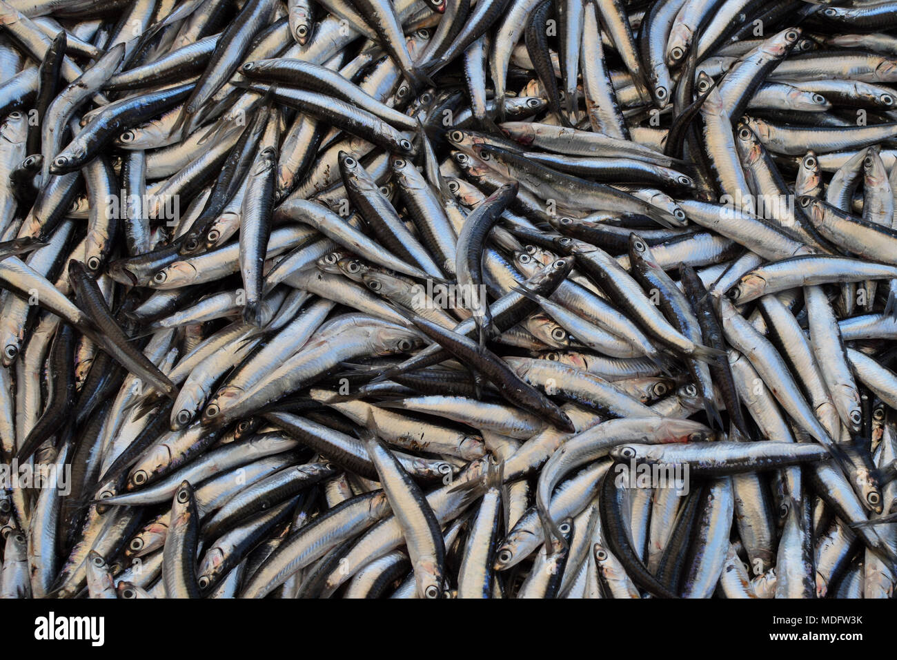 Sprat small forage fish for sale at street market. - Stock Image