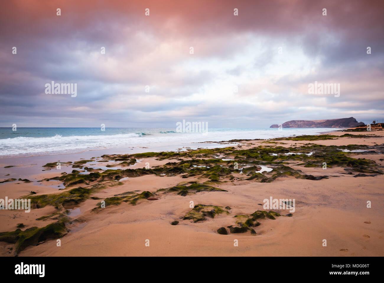 Beach of Porto Santo island, Madeira archipelago, Portugal. Wet coastal stones with seaweed - Stock Image