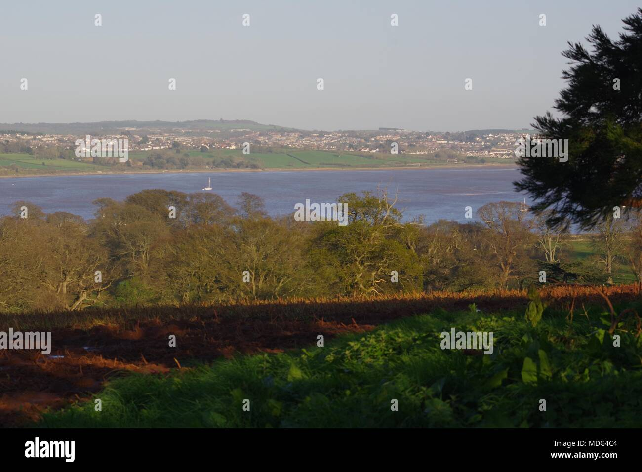 English Oak Wooded Farmland by the Exe Estuary with Lympstone Village Beyond, in the Golden Light of a Spring Evening. Powderham, Exeter, Devon, UK. - Stock Image