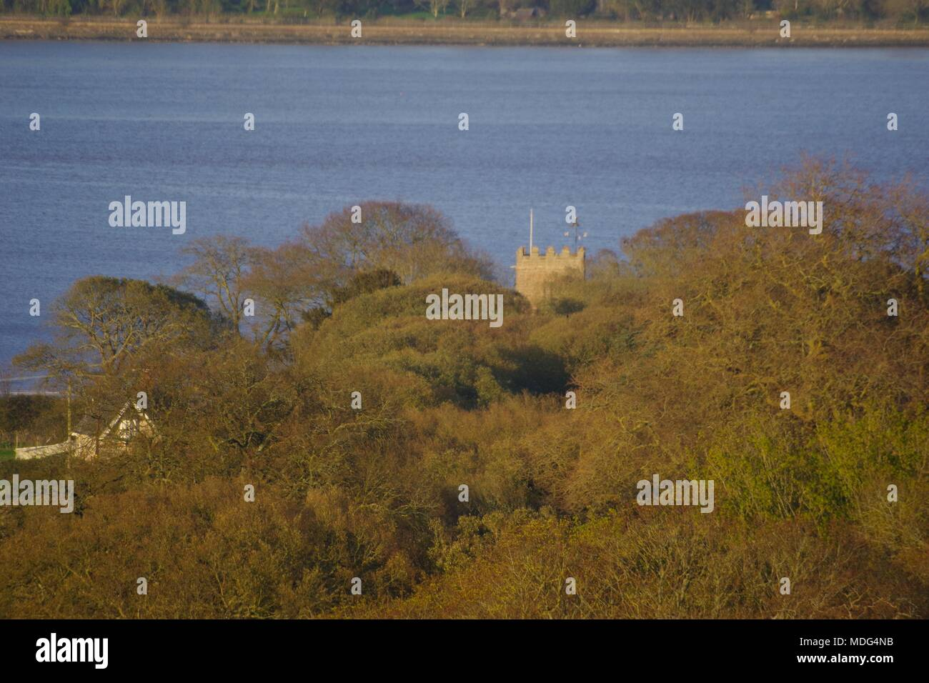 Stone Tower of St Clement's Church rising above the Leafless Oak Woodland Canopy in the Golden light of a Spring Evening with the Exe Estuary beyond. - Stock Image