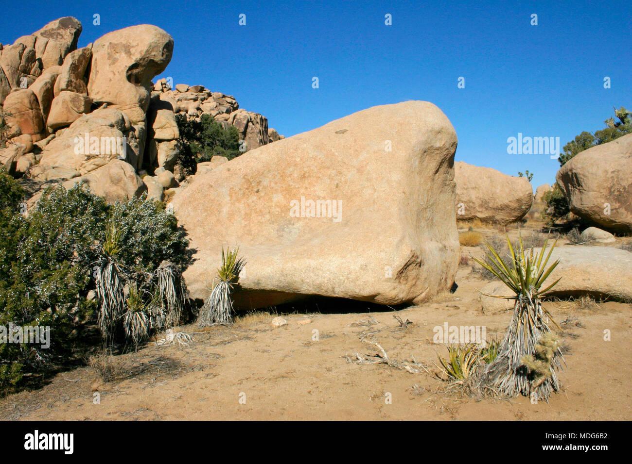 Boulders and Joshua Trees in Joshua Tree National Park, California. Stock Photo