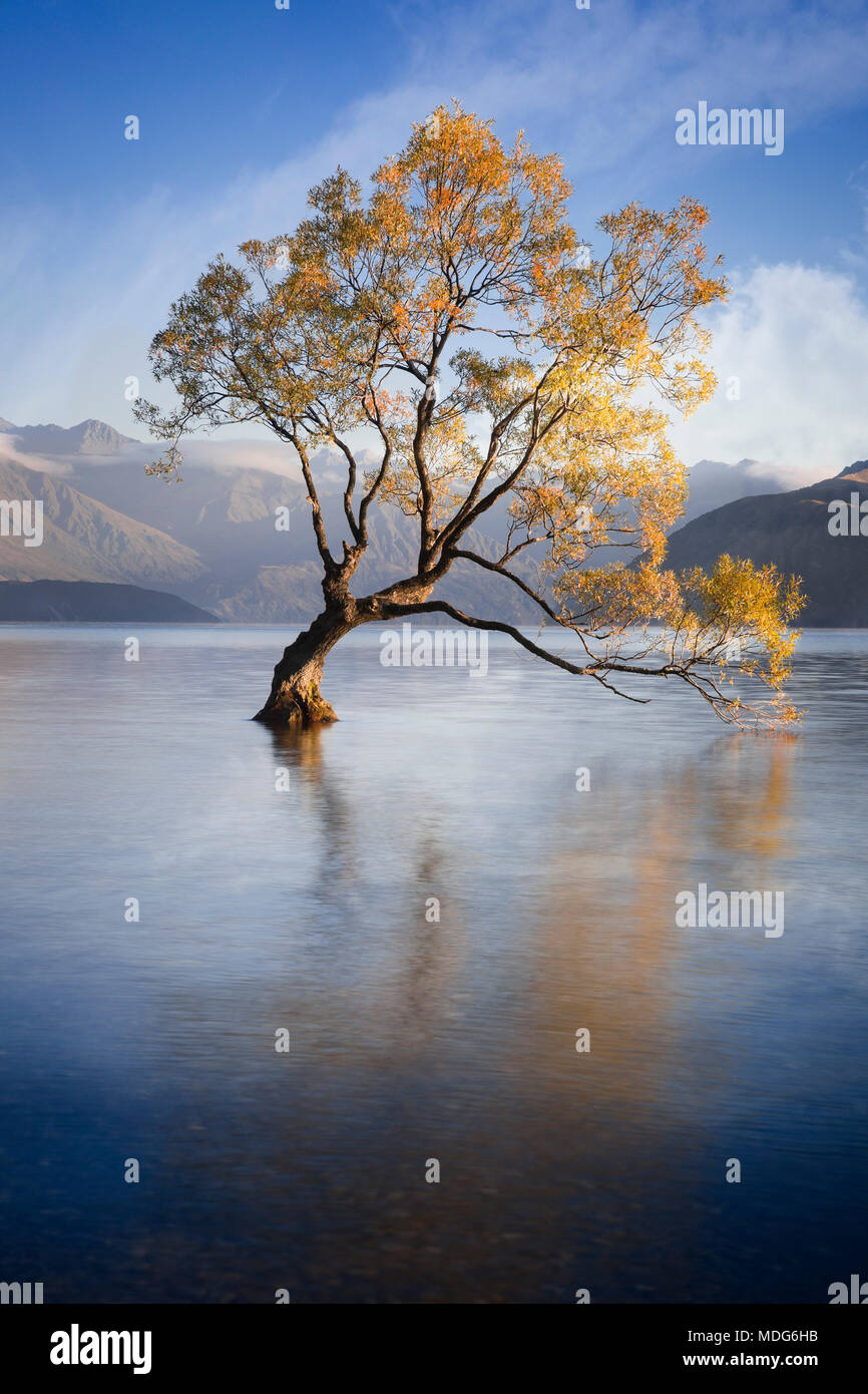 The lone tree of Lake Wanaka, South Island, New Zealand. - Stock Image