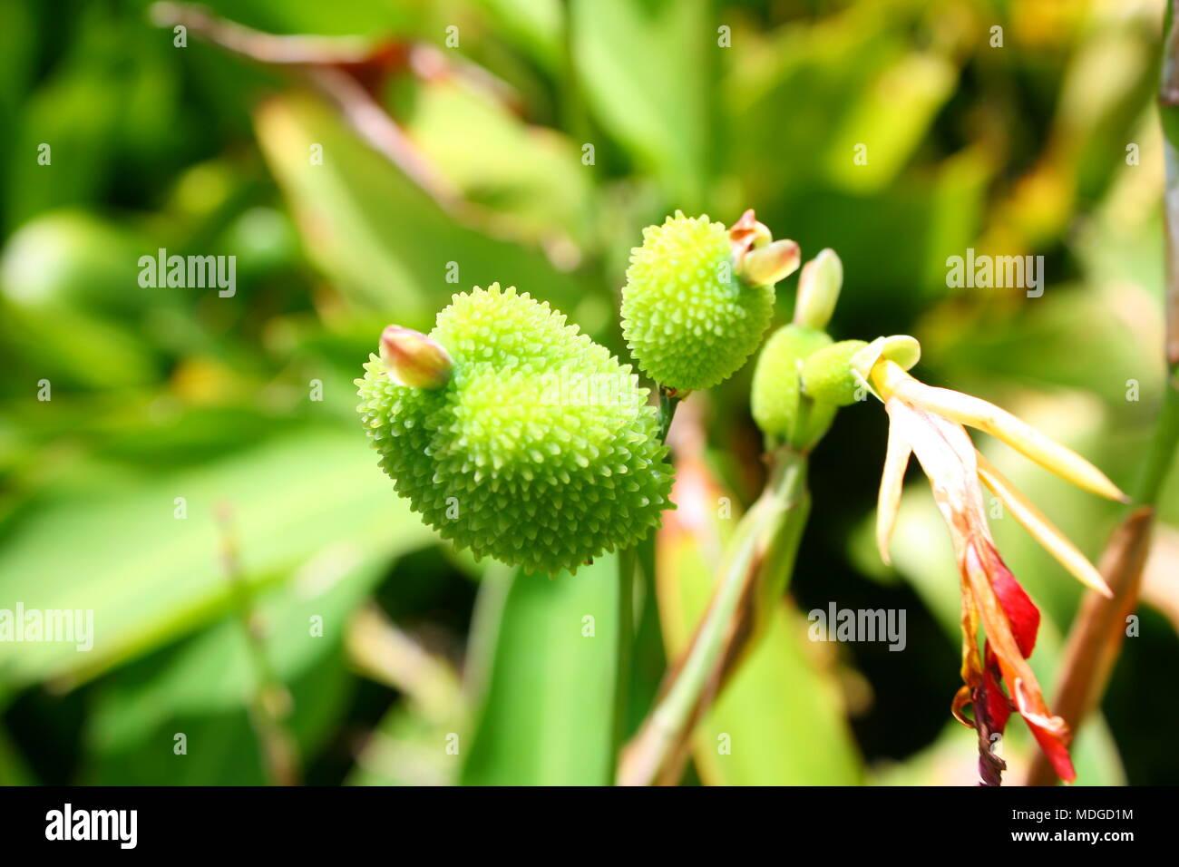 Nature's beauty - Stock Image