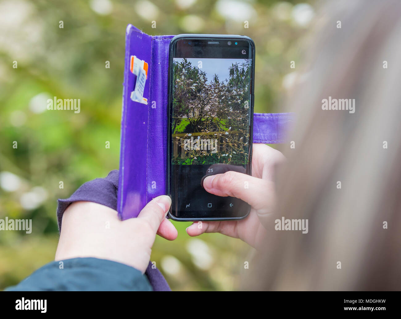 Person taking photographs of flowers and plants on a smartphone. Taking photos with a mobile phone. - Stock Image
