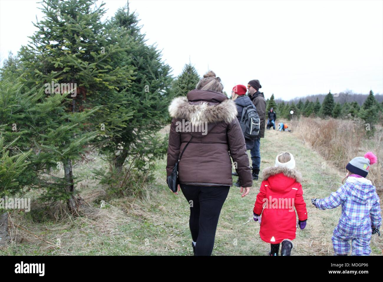 People walking on a path in search of a green holiday tree Stock Photo