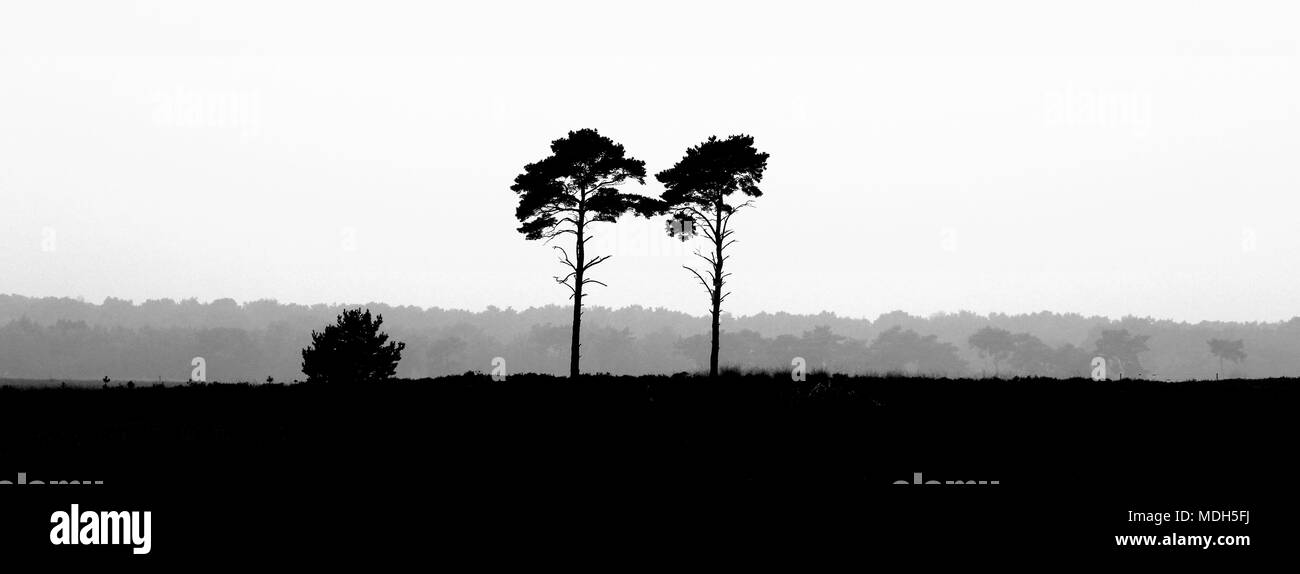 Two Trees And A Bush Where The Lone Survivors Of A Forest