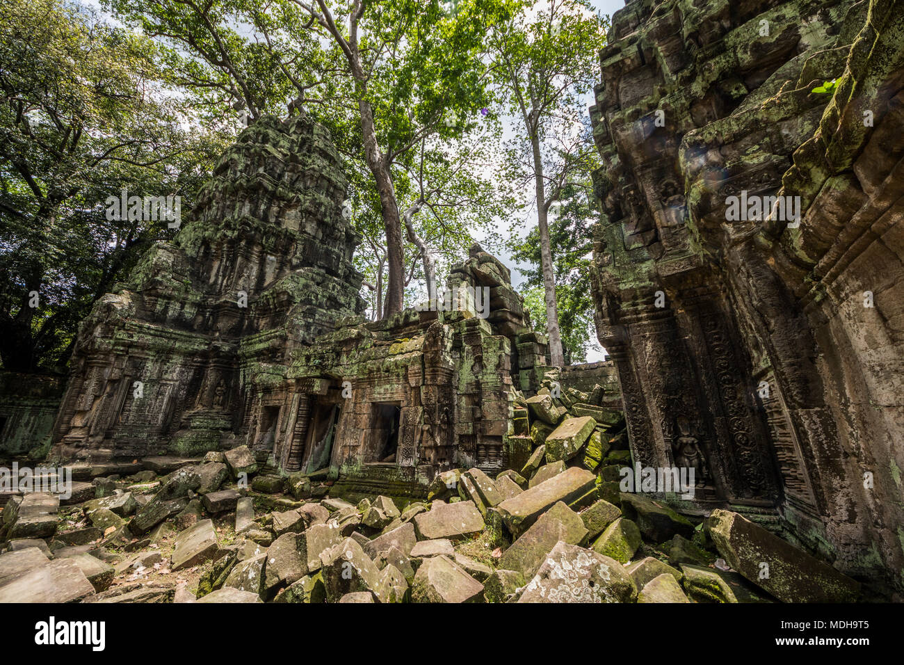 Ta Prohm temple ruins overgrown by vegetation; Angkor, Siem Reap, Cambodia - Stock Image