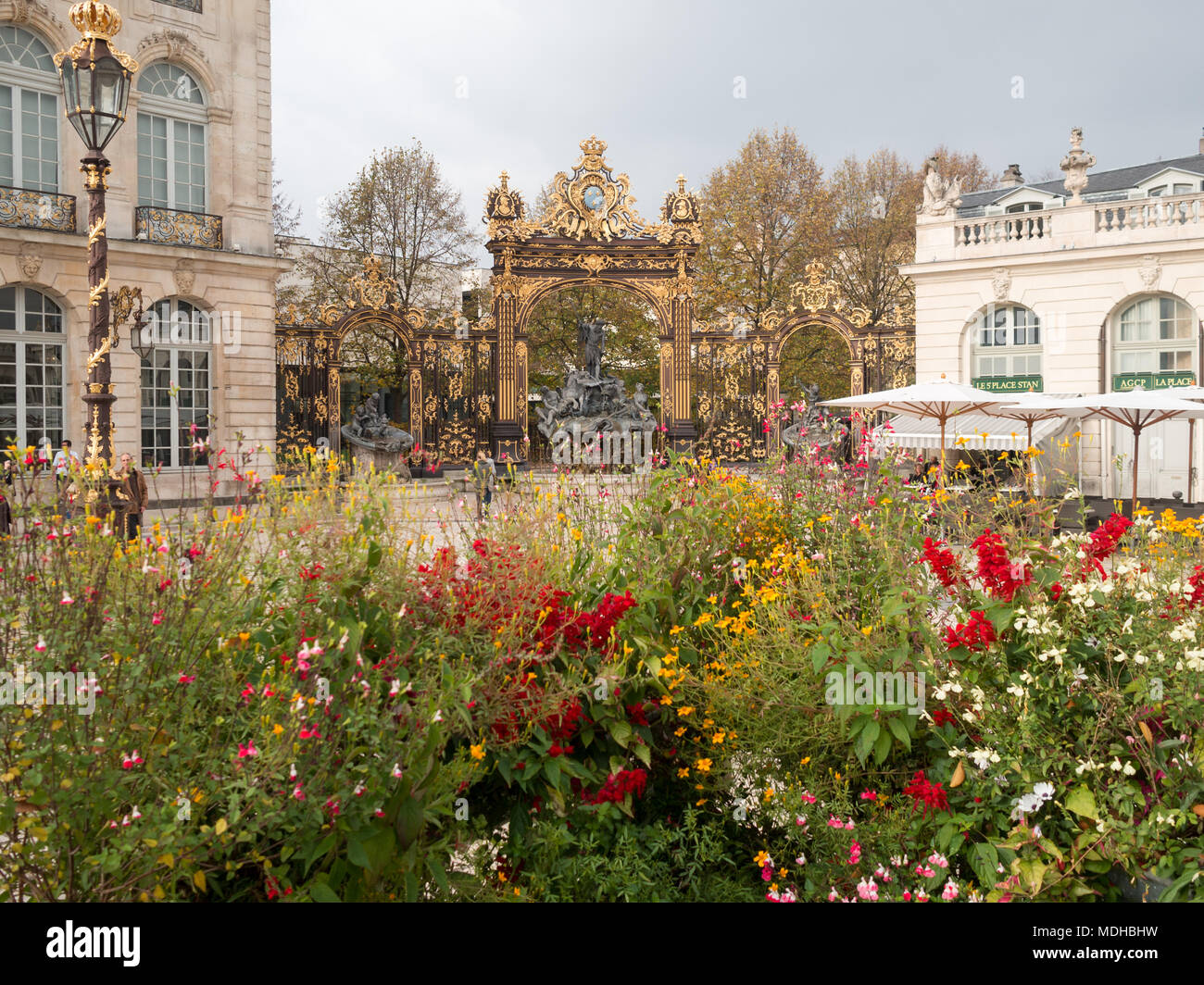 Flower Plant Grand Place Stock Photos & Flower Plant Grand Place ...