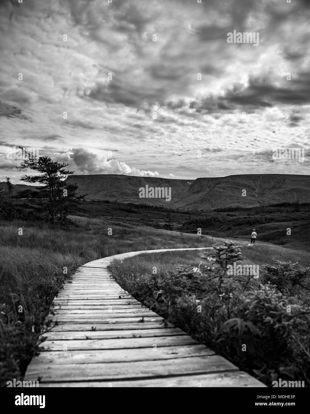 Black and white image of a wooden boardwalk stretching across a landscape with a man in the distance; Bonavista, Newfoundland and Labrador, Canada - Stock Image