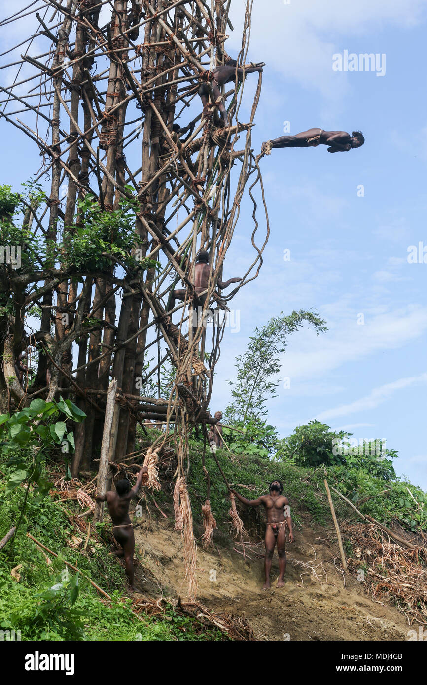 Pentecost, Republic of Vanuatu, July 20, 2014: Traditional land diving ritual (Nangol) with vines tied to their feet, origin of modern Bungee Jumping - Stock Image