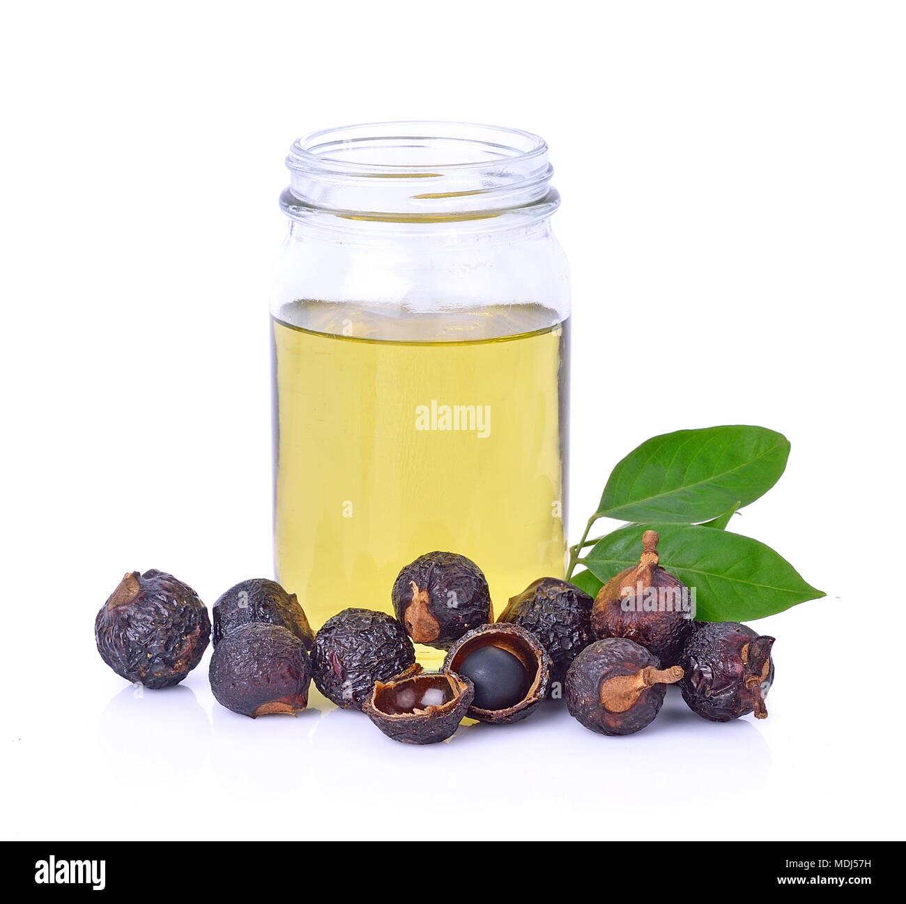 Soap nut tree isolated on  white background Stock Photo