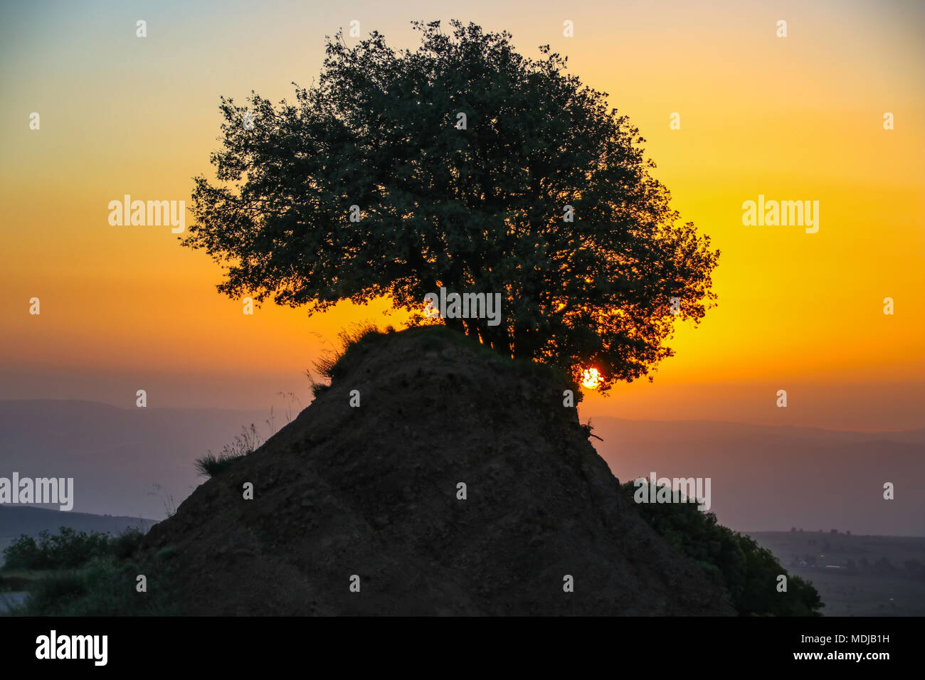 Sunset. The sun shines through the branches of a tree - Stock Image