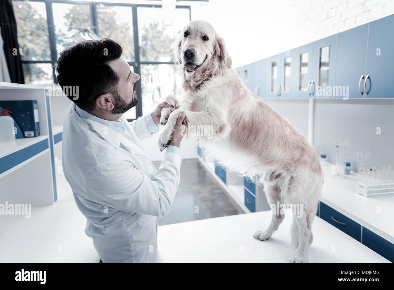 Joyful delighted man looking at the dog - Stock Image