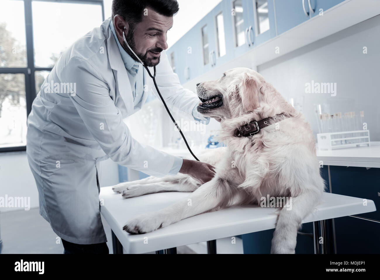 Happy positive veterinarian smiling to the dog - Stock Image