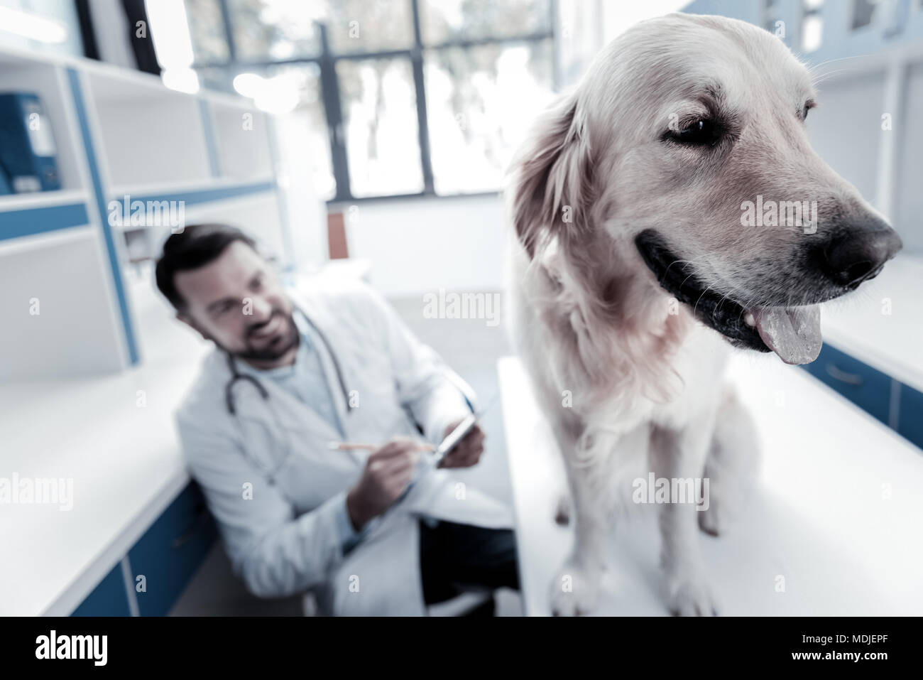 Nice beautiful dog sitting in the vet - Stock Image