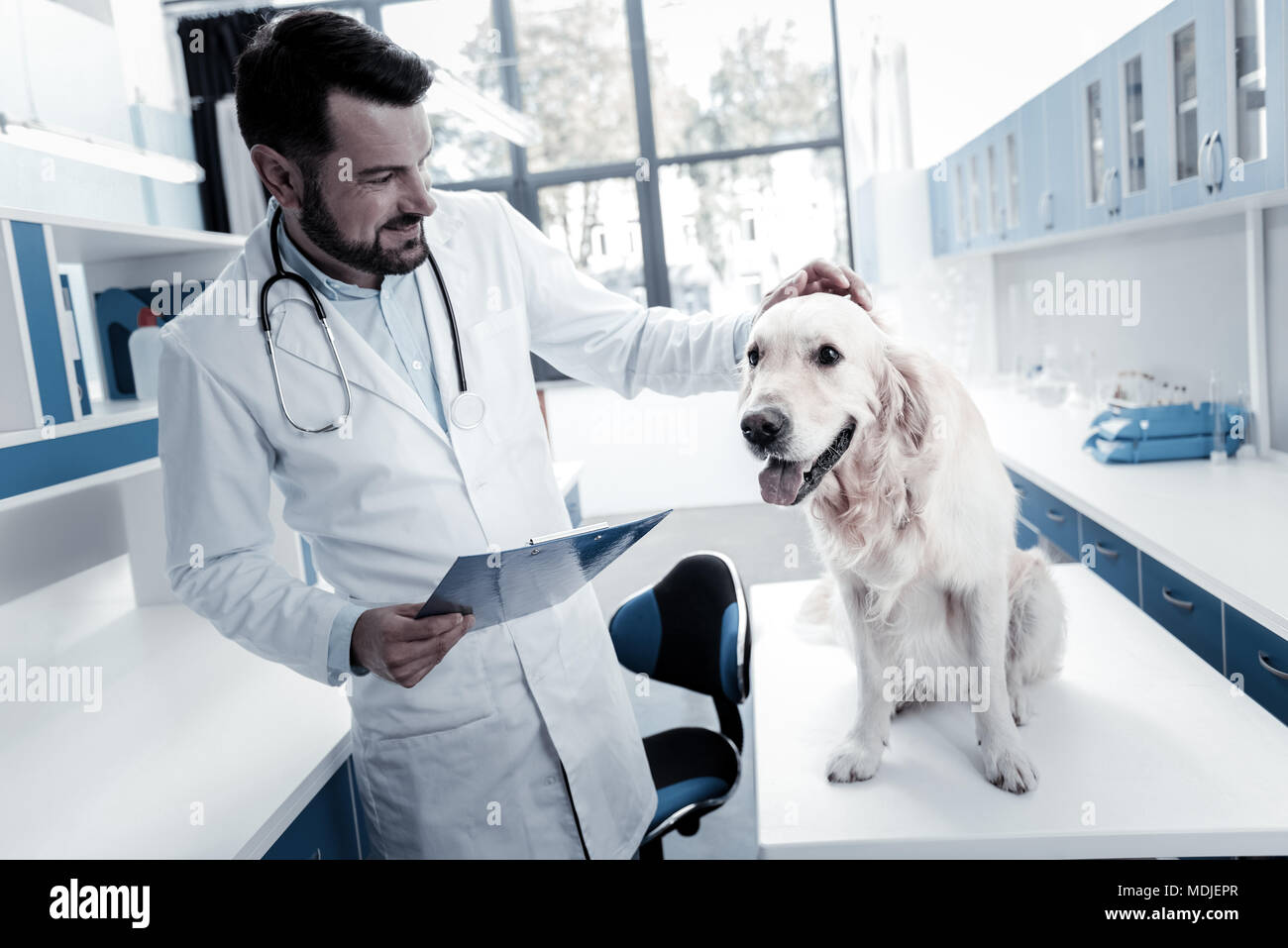 Cheerful nice veterinarian stroking the dog - Stock Image