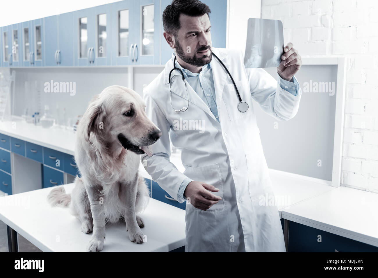 Serious smart doctor looking at the X ray image - Stock Image