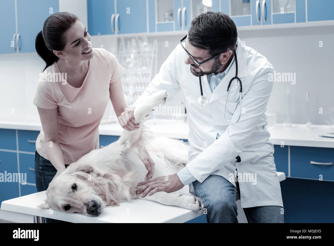Nice young woman worrying about her dog - Stock Image